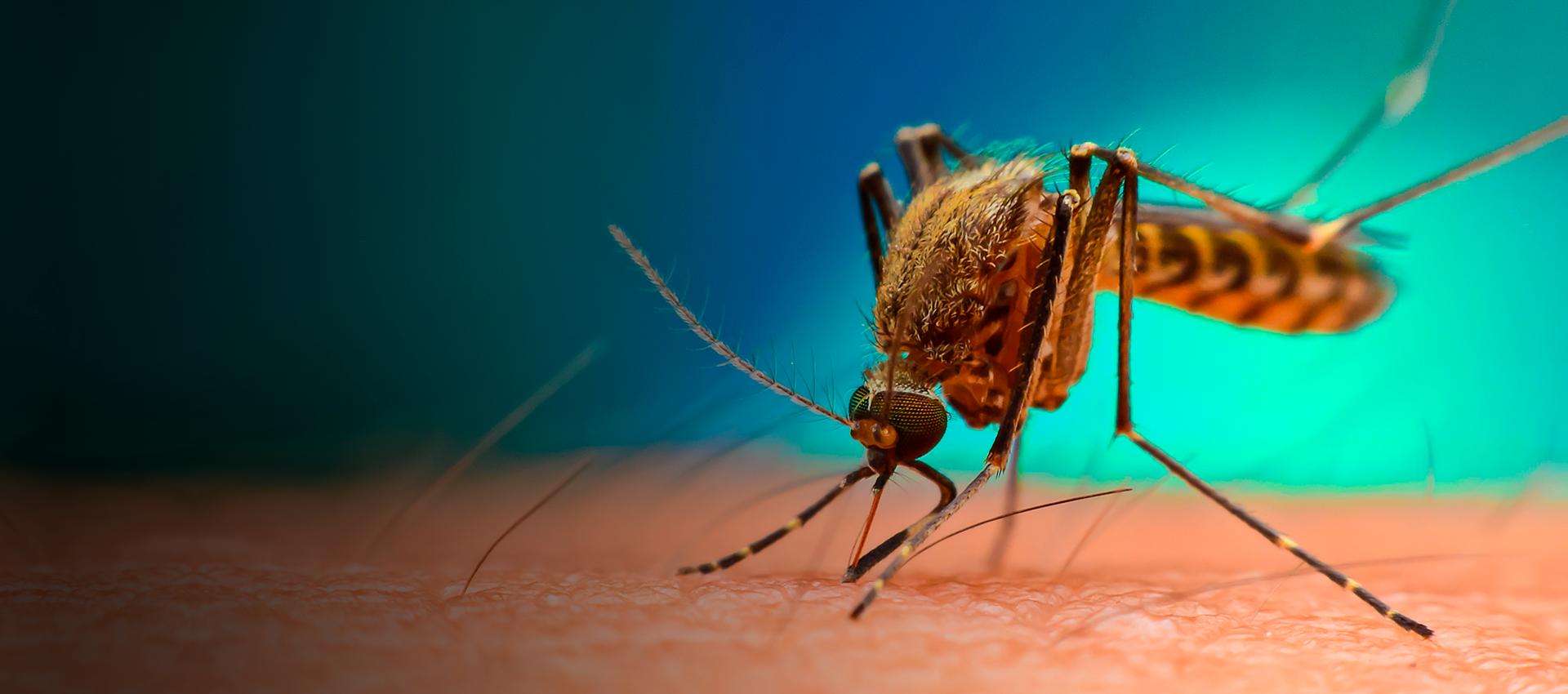 Recomendaciones para el control efectivo de mosquitos